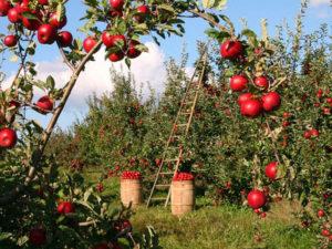Gärtner und Landschaftspfleger in Fürstenzell