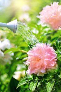 gärtner und landschaftspfleger für ihre pflanzen